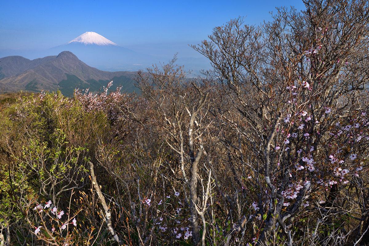 明神ケ岳からの富士山
