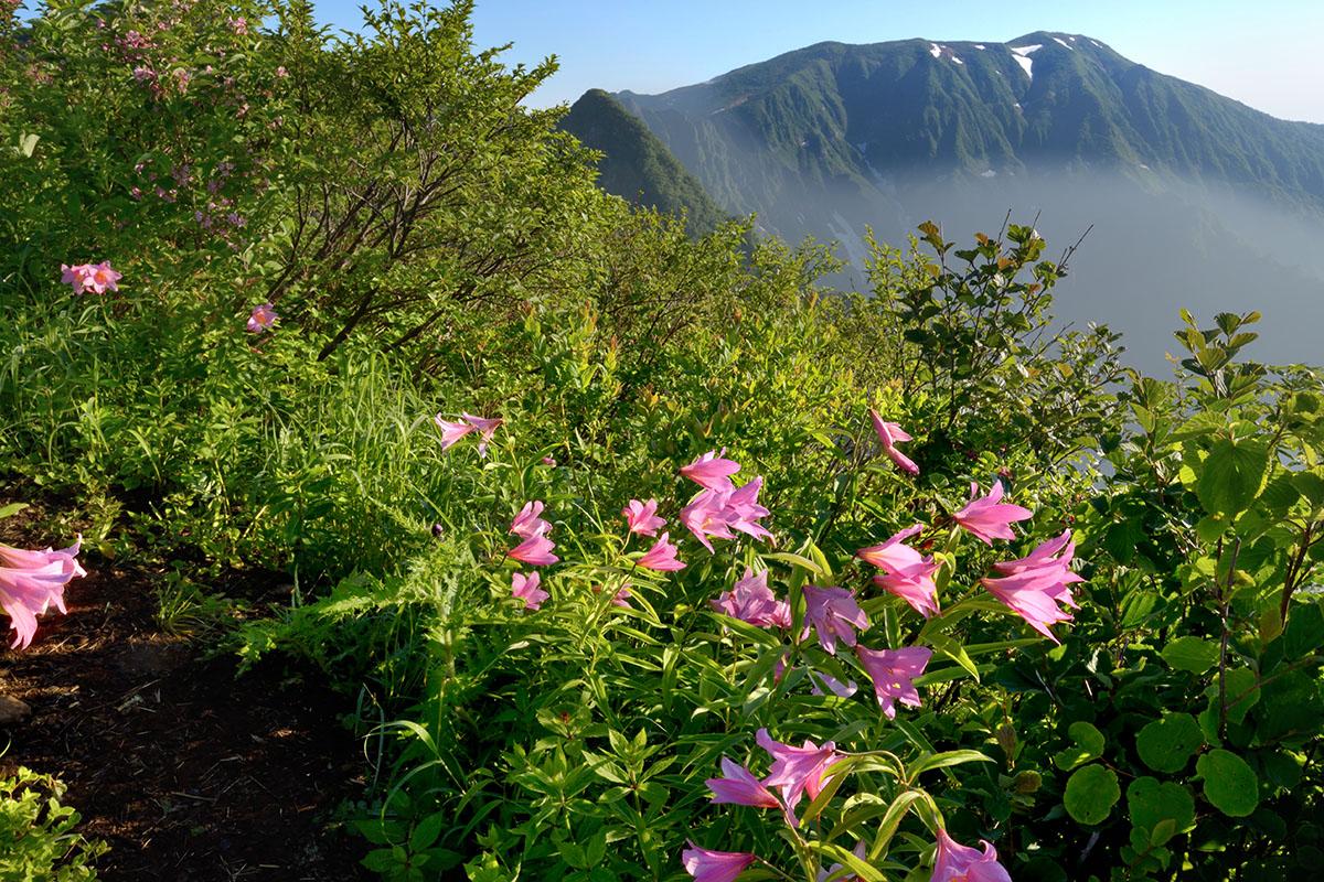 浅草岳とヒメサユリ群落